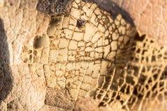 Polpa de madeira das folhas secadas Fotografia de Stock