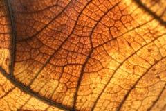 Polpa de madeira das folhas secadas Imagens de Stock Royalty Free