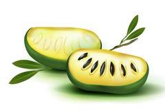 Polpa e sementes realísticas do vetor 3d da foto com as folhas isoladas no triloba branco do asimina do fruto do mamão da papaia  Imagens de Stock Royalty Free