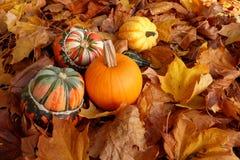 Polpas, abóbora e cabaças de turbante nas folhas de outono torradas Imagens de Stock