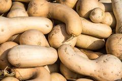Polpas de butternut frescas Imagens de Stock