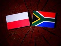 Polsk flagga med söder - afrikansk flagga på en isolerad trädstubbe Royaltyfri Fotografi