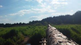 Polsk flod och skog Fotografering för Bildbyråer