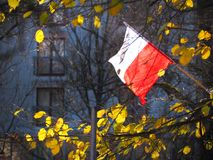 Polsk oberoende dag I röd vitpolermedelflagga Arkivbild