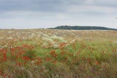 Polska ängar, Polen Arkivfoto