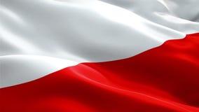 Polska falowania flaga Obywatela 3d połysku flagi falowanie Znak Polska pętli bezszwowa animacja Polski flagi HD postanowienia tł royalty ilustracja