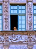 Polska Gdański Wrzesień 13, 2018 Kees pies z brązu włosy siedzi przed błękitnym otwartym okno i patrzeje outside zdjęcia royalty free