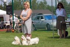 Polska KoziegÅ för hundshow 'owy 19,08,2018 fotografering för bildbyråer