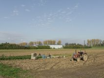 Polska rolnik praca w jarzynowych polach fotografia stock