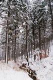 Polski zima las w karkonosze górach Zdjęcie Royalty Free
