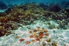 Polstern Sie Seesterne unter Wasser in einem Korallenriff Stockbilder