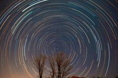 Polstjärnan- och stjärnaslingor över träden Royaltyfri Fotografi
