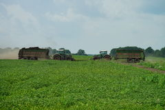 POLTAVA, UKRAINE - 29 JULY 2015: Tractor spreading manure on fields. This procedure allows to collect two harvests a year. Royalty Free Stock Photo