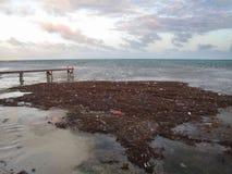 Poluição & lixo que flutuam ao longo da costa fotografia de stock royalty free