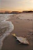 Poluição da praia Imagens de Stock