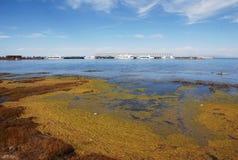Poluição das algas Fotografia de Stock