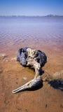 Poluição de água - animais selvagens inoperantes Imagem de Stock