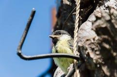 Poluição do ambiente da natureza da cavidade do principiante do pássaro foto de stock