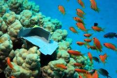 Poluição marinha fotos de stock royalty free