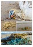 Poluição marinha plástica e seu impacto imagens de stock royalty free
