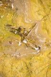 Poluição de água suja no rio ou no lago Fotografia de Stock