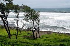 Polulu czerni piasek plażę, widzieć od śladu w drewnach Obrazy Stock
