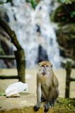 Poluted nature. A big monkey sitting next to trash in plastic bag Stock Photos