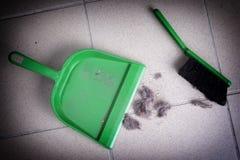 Polvere comune della casa Fotografia Stock Libera da Diritti