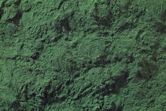 Polvere di alghe di Spirulina fotografie stock libere da diritti
