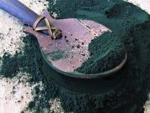 Polvere di alghe di Spirulina fotografia stock libera da diritti