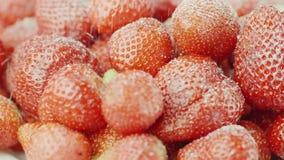 Polvilhe as morangos suculentas vermelhas com o açúcar As grões do açúcar caem em bagas da morango, vídeo de movimento lento filme
