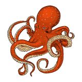 Polvo da criatura do mar mão gravada tirada no esboço velho, estilo do vintage náutico ou marinho, monstro ou alimento animais de ilustração stock