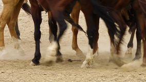 Polvo de levantamiento de los pies del caballo metrajes