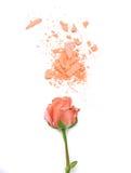 Polvo de Rose y del cosmético en el fondo blanco Fotos de archivo
