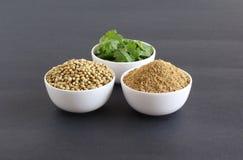 Polvo del coriandro con las semillas y las hojas de coriandro fotografía de archivo