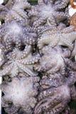 Polvo fresco na exposição no mercado de peixes Fotografia de Stock Royalty Free