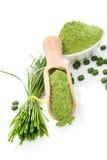 Polvo y píldoras de Wheatgrass. Superfood. imagen de archivo