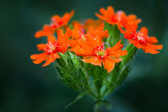 Polwhealboeket van bloemen Royalty-vrije Stock Foto
