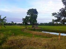 Poly i łąk zielony kolor fotografia stock
