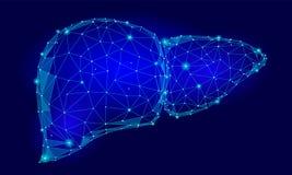Poly mänsklig triangel för inre organ för lever lågt Förbindelseillu för kroppsdel för medicin för modell för teknologi 3d för pr royaltyfri illustrationer