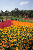 Poly shixiang lake tulip tourism festival Royalty Free Stock Photo