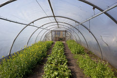 Poly tunnel in springtime Stock Photo