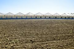 Polycarbonate greenhouses. Greenhouse complex. Greenhouses for growing vegetables under the closed ground Stock Photography