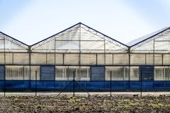 Polycarbonate greenhouses. Greenhouse complex. Greenhouses for growing vegetables under the closed ground Stock Photo