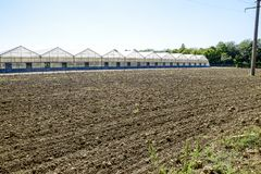 Polycarbonate greenhouses. Greenhouse complex. Greenhouses for growing vegetables under the closed ground Royalty Free Stock Photo