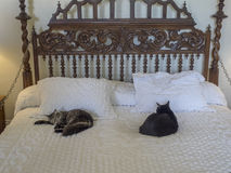 Polydactyl katten in Ernest Hemingway House, Key West Stock Foto's