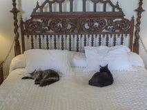 Polydactyl katter på Ernest Hemingway House, Key West Arkivfoton