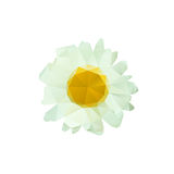Polygon chamomile bud on a white background. Stock Photos