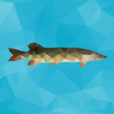Polygon pike. Vector abstract illustration of a pike made with triangles Stock Photography