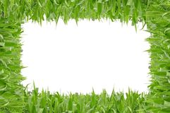 Polygon shape grass Royalty Free Stock Photos